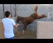 حسان الجهني Horse Lover
