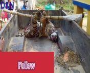 <br/>Tiger of Death<br/>Dancing And Natural Videos<br/>NepaliFlag<br/>Dancing And Natural Videos <br/>पर्सा<br/>Dancing And Natural Videos बाट प्रकृतिको (जनावर तथा चरा चुरून्गीको भिडियो) भिडियो ,गाउँ ठाउको News र Dancing videos तथा कला झलकिने खालको भिडियोहरु प्रसारण गरिन्छ।<br/><br/>Youtube share=Dancing And Natural Videos<br/><br/>Facebook Share= Dancing And Natural Videos<br/><br/>Twitter share=@rm39721687<br/><br/>Camera =Baliram ram<br/><br/>Thanks <br/>Baliram ram<br/><br/># NepaliFlag<br/>#D&N Videos<br/>#DancingandNaturalvideos<br/>#D&NVideos<br/>#पर्सा<br/>#Visit Nepal 2020<br/>#Parsa National Park<br/>#पर्सा राष्ट्रिय निकुञ्ज <br/>#Animals<br/><br/>D&N Videos<br/>D&NVideos<br/>d&n videos<br/>d&nvideos<br/><br/>Dancing And Natural Videos<br/><br/>DancingAndNaturalVideos<br/><br/>dancingandnaturalvideos<br/><br/>Dancing and natural videos<br/><br/>Dancingandnaturalvideos<br/><br/>dancing and naturalvideos<br/><br/>#D&N Videos<br/><br/>#D&NVideos<br/><br/>#d&n videos<br/><br/>#d&nvideos<br/><br/>#Dancing And Natural Videos<br/><br/>#DancingAndNaturalVideos<br/><br/>#dancingandnaturalvideos<br/><br/>#Dancing and natural videos<br/><br/>#Dancingandnaturalvideos<br/><br/>#dancing and naturalvideos