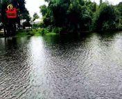 পাঙ্গাস মাছ চাষ   Pangas Fish Farming in Bangladesh   Kalipur   Dhanbari<br/>YouTube- https://youtu.be/o2uoYCyIvNg<br/>SUBSCRIBE To My YouTube   https://www.youtube.com/SaidurRahmanBabu<br/><br/>আমার আলোচিত ভিডিও গুলি দেখুন<br/><br/>নৌকায় পিকনিক বালু নদীতে   Boat Picnic At Balu River<br/>https://youtu.be/EJgMN-ekJAo<br/>Drone Flight At Hatirjheel Dhaka Bangladesh With DJI Phantom 4<br/>https://youtu.be/bK25mWjkeL8<br/>মুকুট হারিয়ে কাঁদলেন জান্নাতুল নাইম এভ্রিল!<br/>https://youtu.be/Gpr0DyQOvbg<br/>Bangladesh Navy's Maritime Counter Terrorism Exercise<br/>https://youtu.be/HZIt8424mNk<br/>Travelling To Koh Larn Coral Island From Pattaya<br/>https://youtu.be/9vPDrt59o7I<br/>Aerial View Of Dhaka City Bangladesh By DJI Phantom 4<br/>https://youtu.be/M9SUhmKuys4<br/>Bangladesh And India Relationship By Fatima Amin<br/>https://youtu.be/LbBYHxf5LL0<br/><br/>Thanks for checking out the video. If you like it, please leave a comment, give it a thumbs up or like, share with your friends and subscribe please. All the best.<br/><br/>Follow Me......<br/>Mail- saidur_babu@yahoo.com<br/>Facebook- https://www.facebook.com/babuvlogbd<br/>iPorosh-https://www.iporosh.com/@saidur_babu<br/>Twitter- https://twitter.com/saidur_babu<br/>Instagram- https://www.instagram.com/saidur_babu<br/>Dailymotion- https://www.dailymotion.com/saidur_babu<br/>Vimeo- https://vimeo.com/saidurbabu<br/>Tiktok- https://www.tiktok.com/@saidur_babu<br/><br/>*WARNING ANTI PIRACY *<br/>======================<br/><br/>Any Person Reproduction, Redistribution Or Re-upload Is Strictly Prohibited Of This Material. Legal Action Will Be Taken Against Those Who Violate The Copyright.<br/>#পাঙ্গাসচাষ<br/>#পাঙ্গাসমাছ<br/>#মাছচাষ<br/>#মৎসখামার